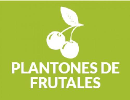 Plantones de Frutales