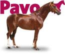 menu_caballo