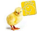 pollo_180