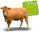 vaca_carne_180